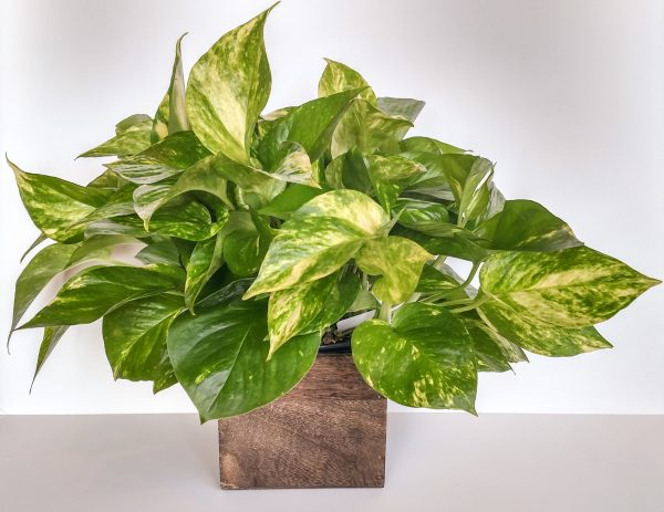 Indoor Plants Ideal for Low Light
